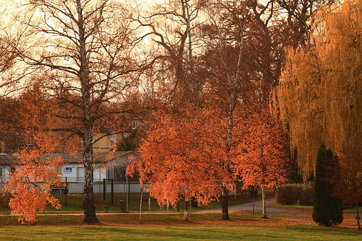 800px-Autumn_Glow_(4131469252)525