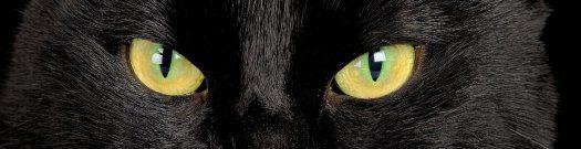 Schwarze_Katze